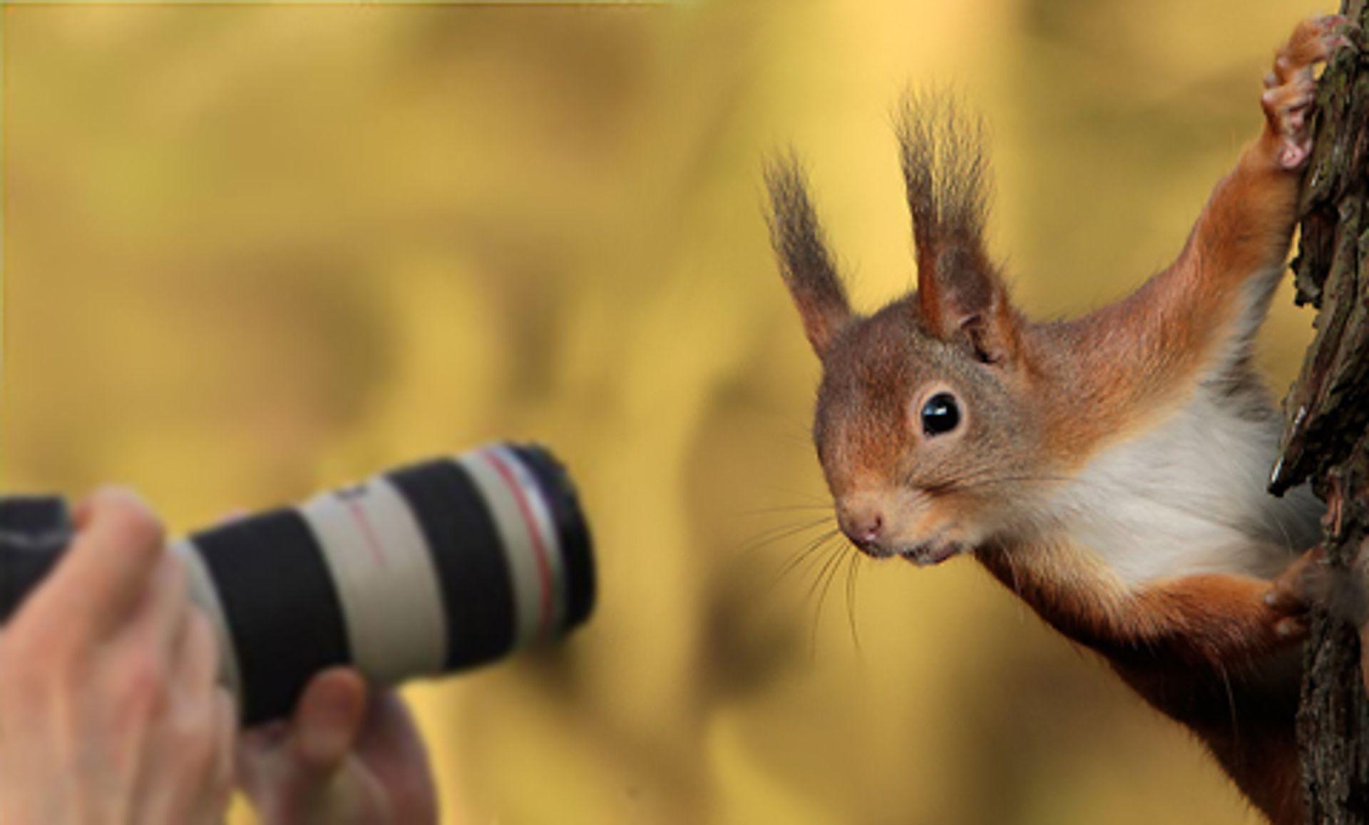 Afbeelding van Stuur je natuurfilmpje naar Zelf Geschoten!