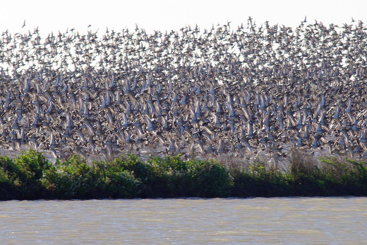 Afbeelding van Vogelliefhebbers in verzet tegen vliegveld Lissabon