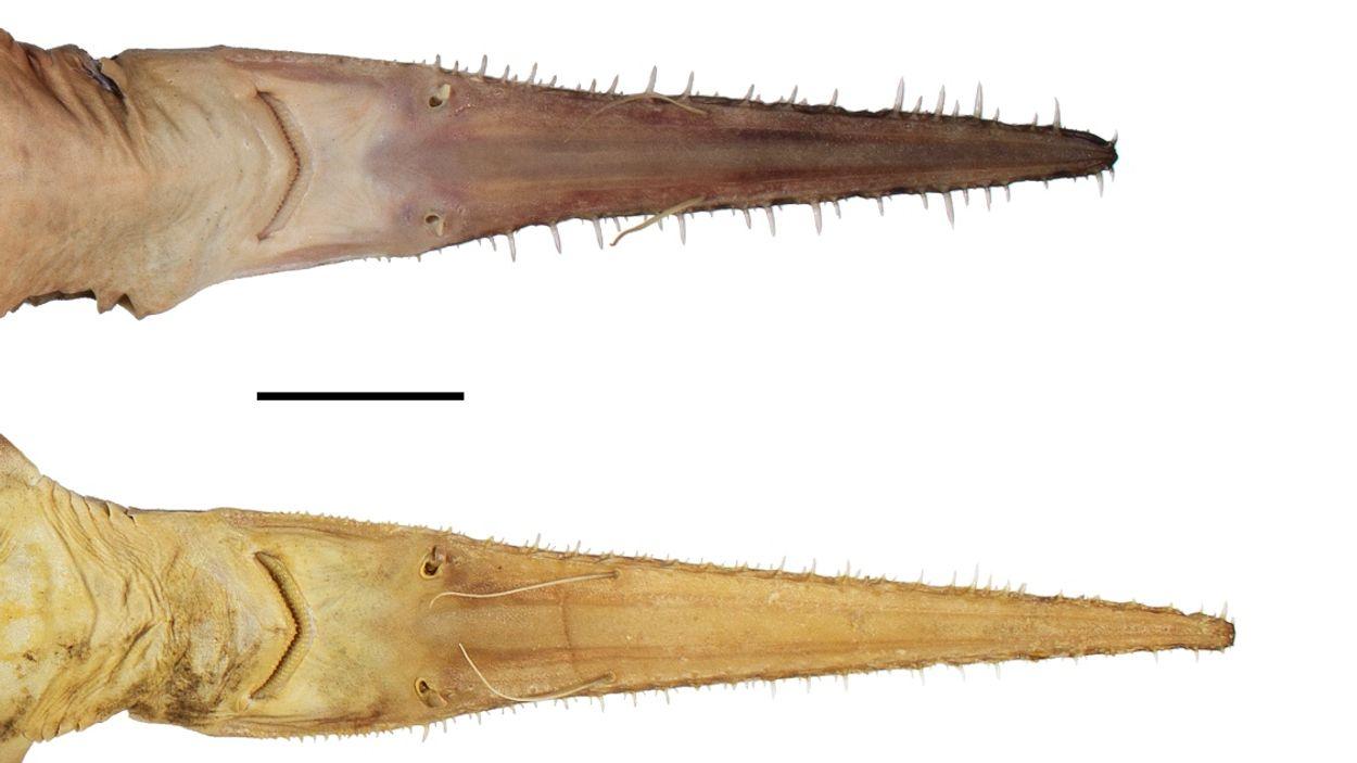 Afbeelding van Nieuwe haaien, ringmus, Kaaistoep, fenolijn en overige radio-onderwerpen