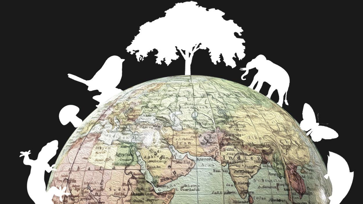 Afbeelding van 'Megaproject' om biodiversiteit in kaart te brengen