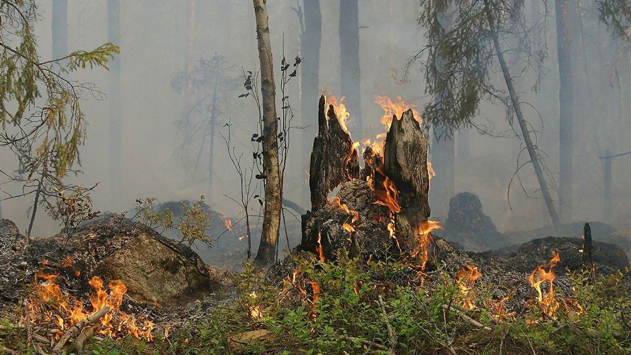 Afbeelding van Peelbrand grootste natuurbrand ooit in Nederland