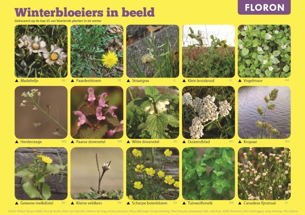 Afbeelding van Uitslag Eindejaars Plantenjacht: deze soorten bloeien in de winter