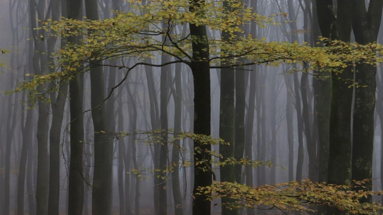 Afbeelding van Kleine bossen belangrijker dan gedacht
