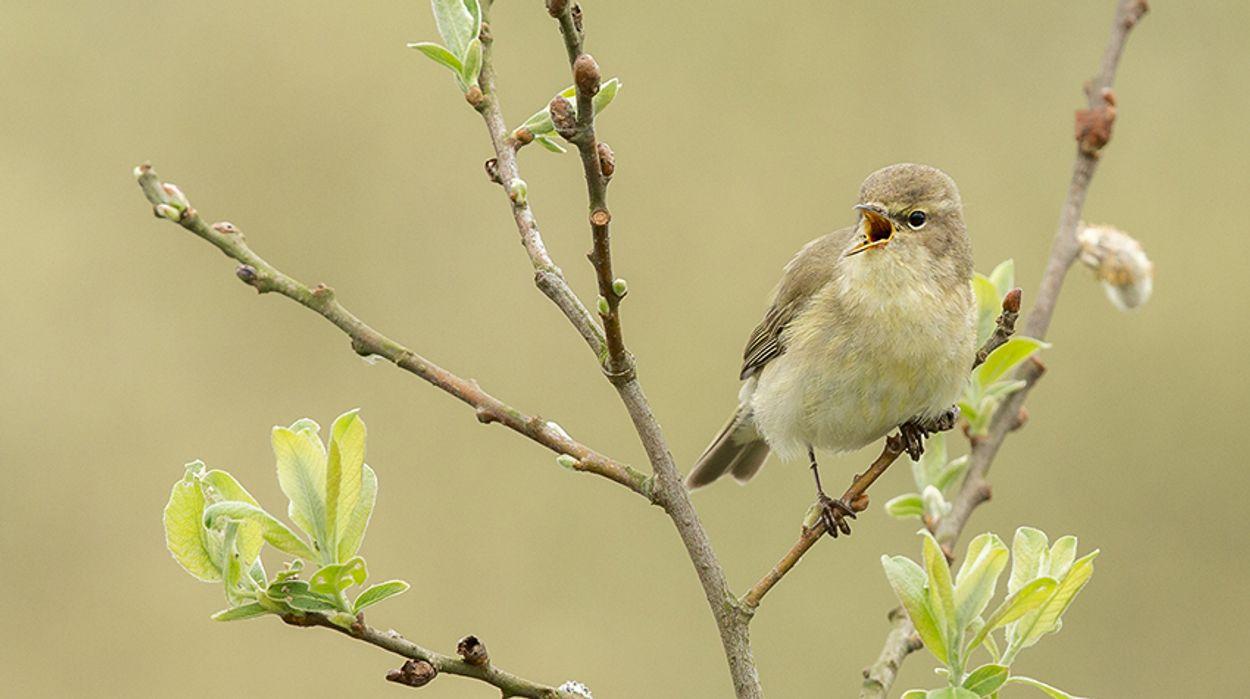 Afbeelding van Boze vogels: vliegtuiglawaai maakt vogels agressief