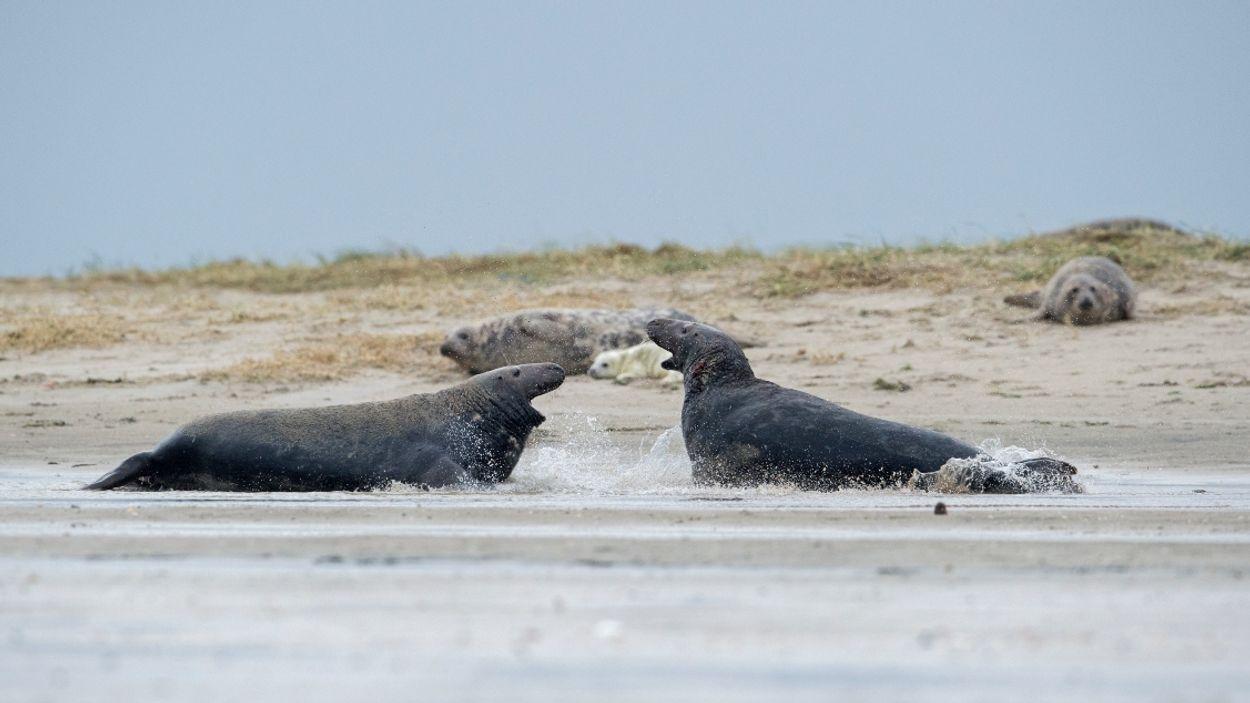 Afbeelding van Nieuwe natuurfilm over de Waddenzee