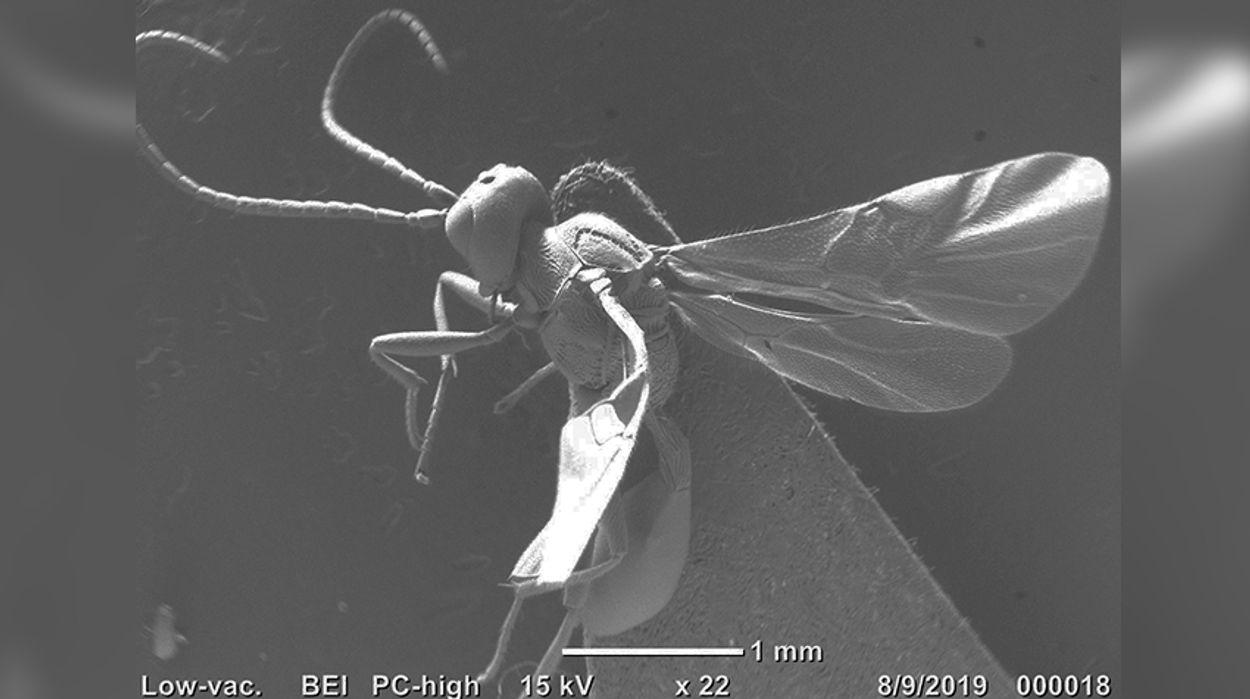 Afbeelding van Twee compleet nieuwe soorten ontdekt in Vondelpark