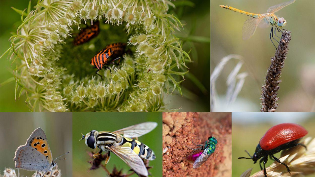 Afbeelding van Internationale wetenschappers presenteren samen masterplan voor insectenherstel