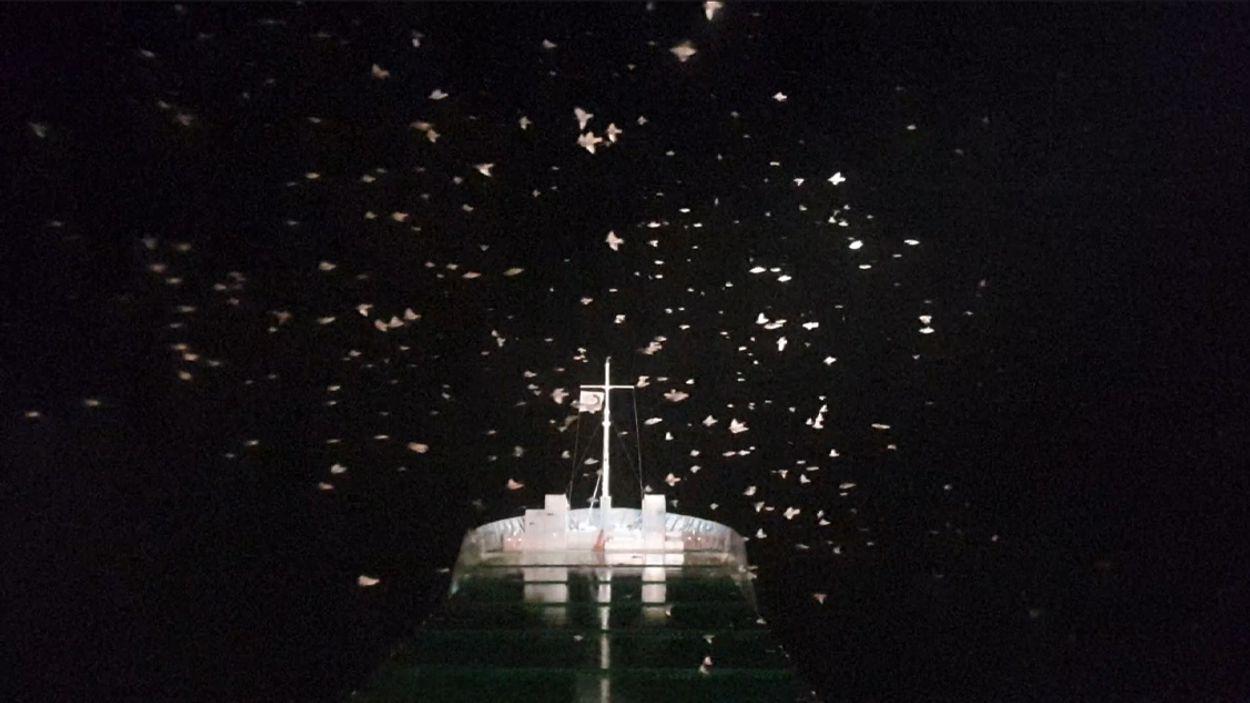 Afbeelding van Spreeuwen vliegen massaal rond boot | Winnaar Zelf Geschoten
