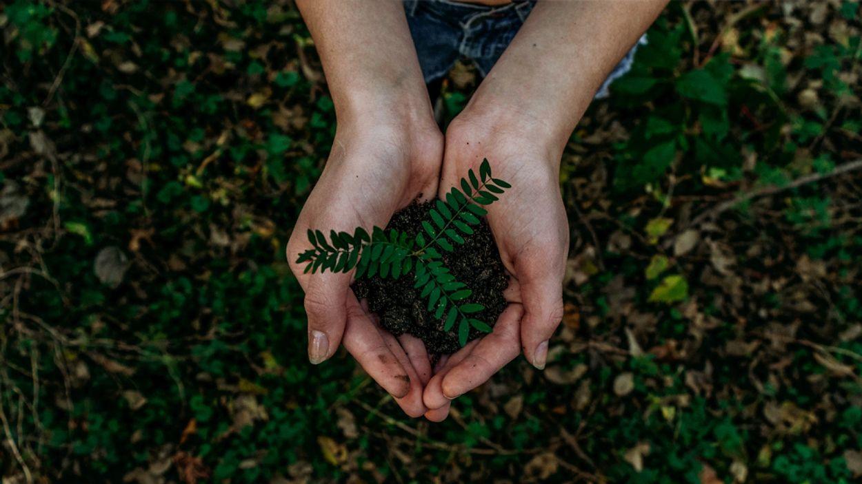 Afbeelding van Staatsbosbeheer begint met planten klimaatbestendig bos
