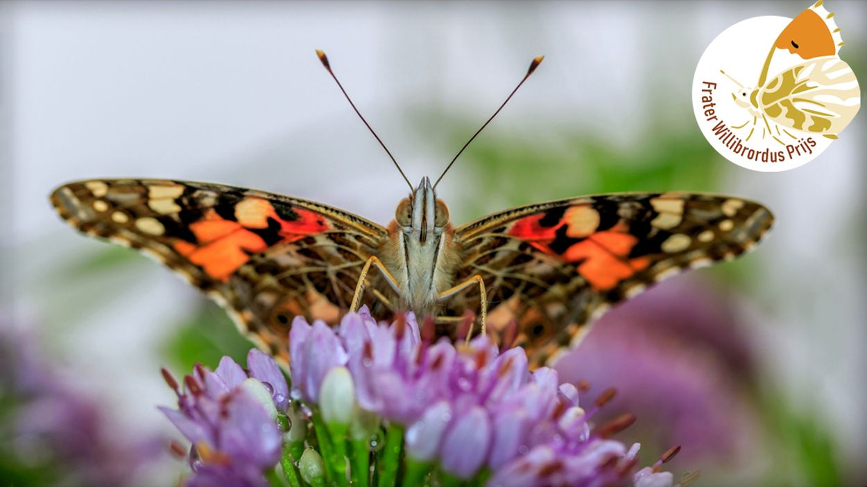 Afbeelding van Distelvlinders van Hans Gartner winnen de Frater Willibrordus Prijs