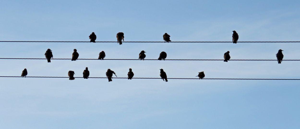 Afbeelding van Vogels in de muziek