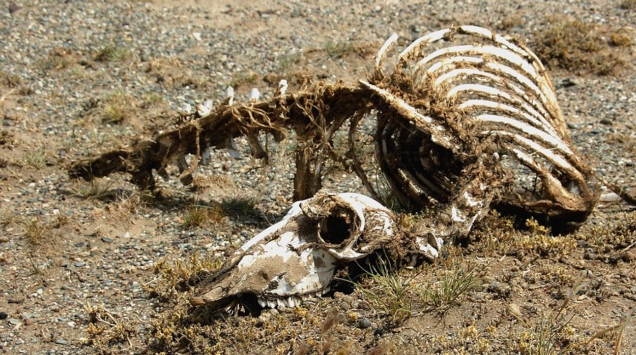 Afbeelding van 'Dood doet leven' nu ook op de Veluwe