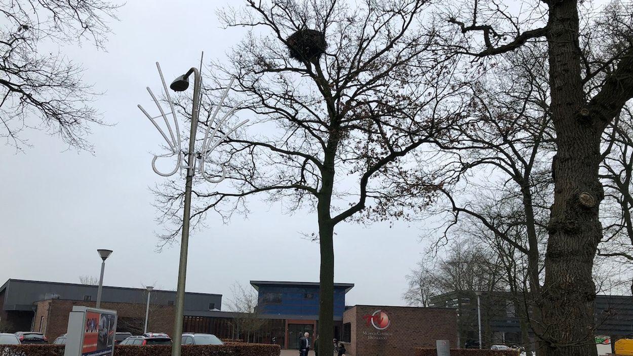 Afbeelding van Commotie om ooievaarsboom