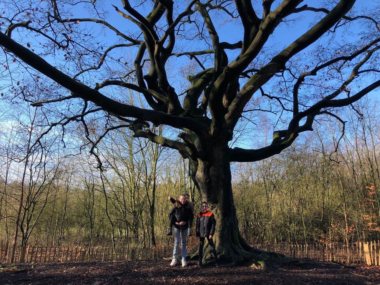Afbeelding van Roodsnavelkeerkringvogels, de heksenboom van Bladel, de fenolijn en overige radio-onderwerpen