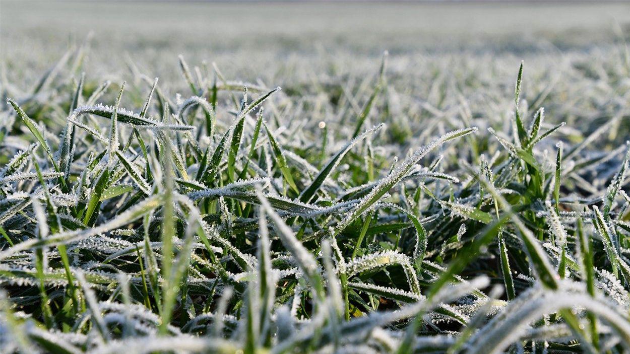 Afbeelding van Eerste matige vorst van deze winter gemeten