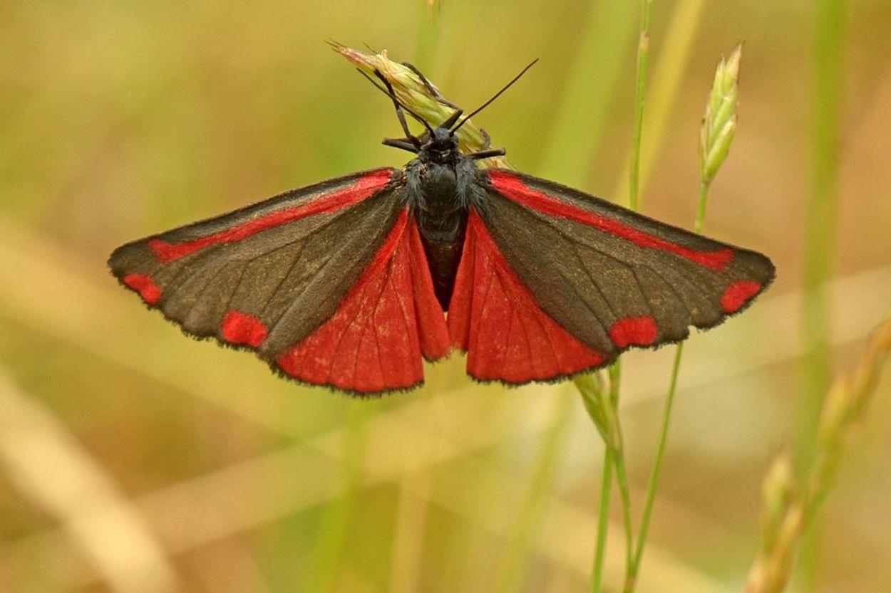 Afbeelding van Vlindertuintelling: vlinders herkennen en melden
