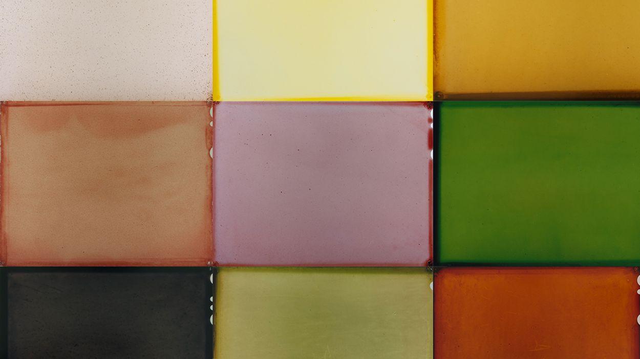 Afbeelding van Kunstenaarsduo onthult échte kleur van plant