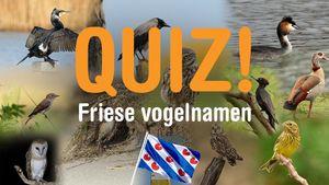 Afbeelding van Quiz: ken jij deze Friese vogelnamen?