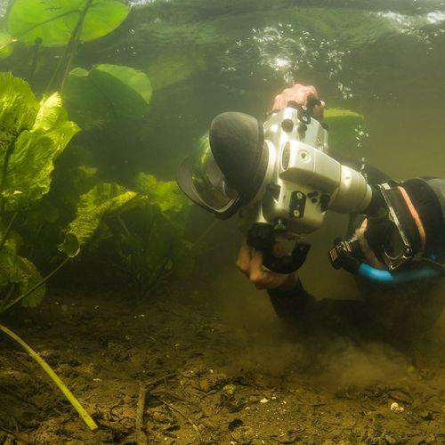 Afbeelding van Onderwaterfotograaf Willem Kolvoort fotografeert alleen nog in zijn vijver