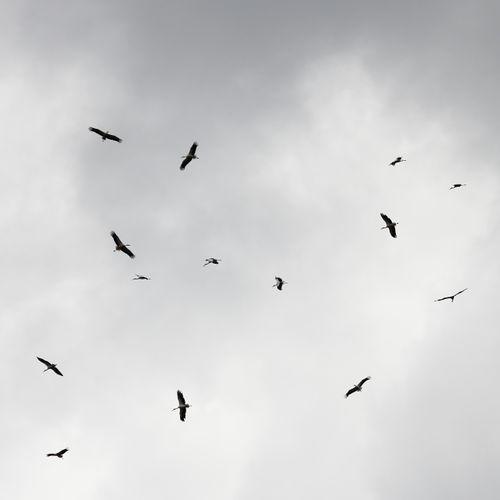 Afbeelding van De vogeltrek van voorjaar 2019   Podcast Special