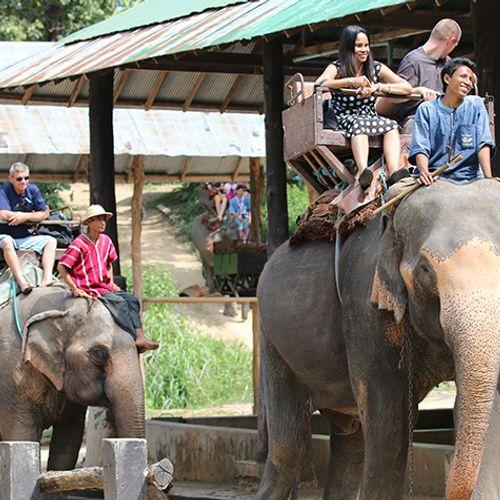 Afbeelding van Geen olifantenritten meer bij Cambodjaans tempelcomplex