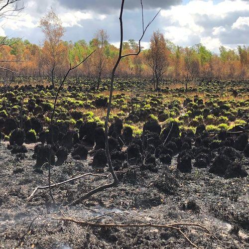 Afbeelding van De Deurnese Peel na de brand