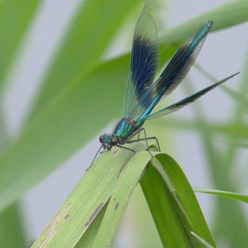 Afbeelding van Libellen in het antenneveld