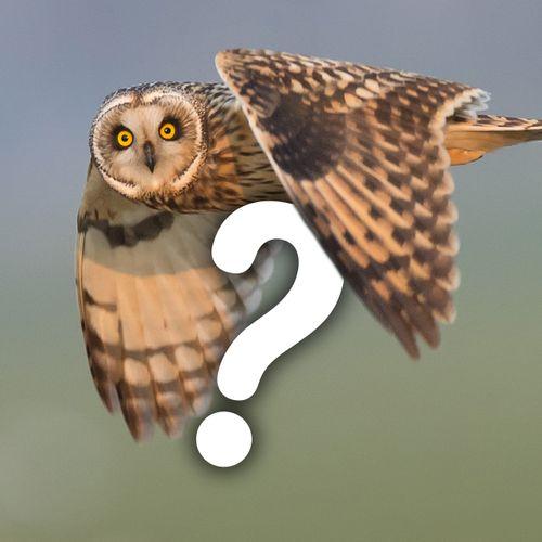 Afbeelding van Vraagbaak: stel je vraag voor de radio!