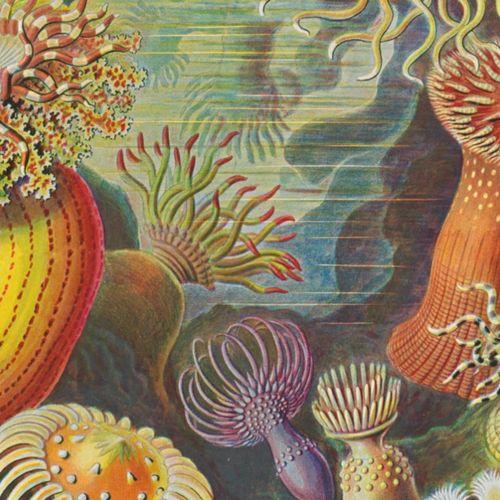 Afbeelding van De wonderlijke wereld van Ernst Haeckel