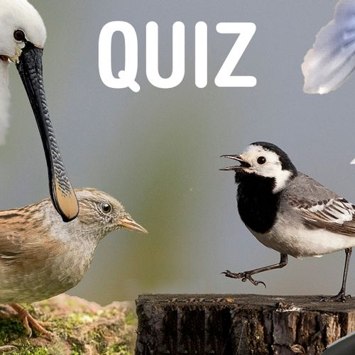 Afbeelding van Ken jij deze Nedersaksische vogelnamen?