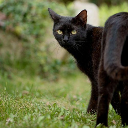Afbeelding van Zorgen katten voor een ecologische ramp?