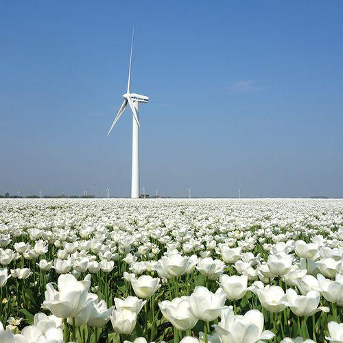 Afbeelding van Nederland wil sancties voorkomen door duurzame energierechten te 'kopen'